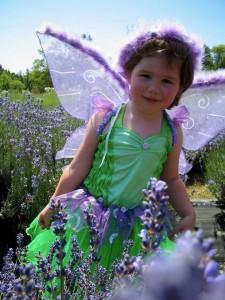 lavender-fairy_orig